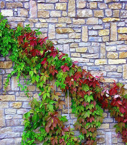 humedad por capilaridad en muros