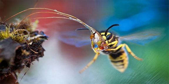 ¿Sabías que la humedad atrae a las avispas?