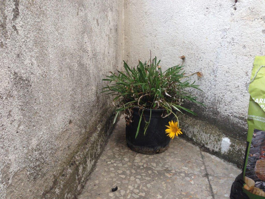 humedades en jardines