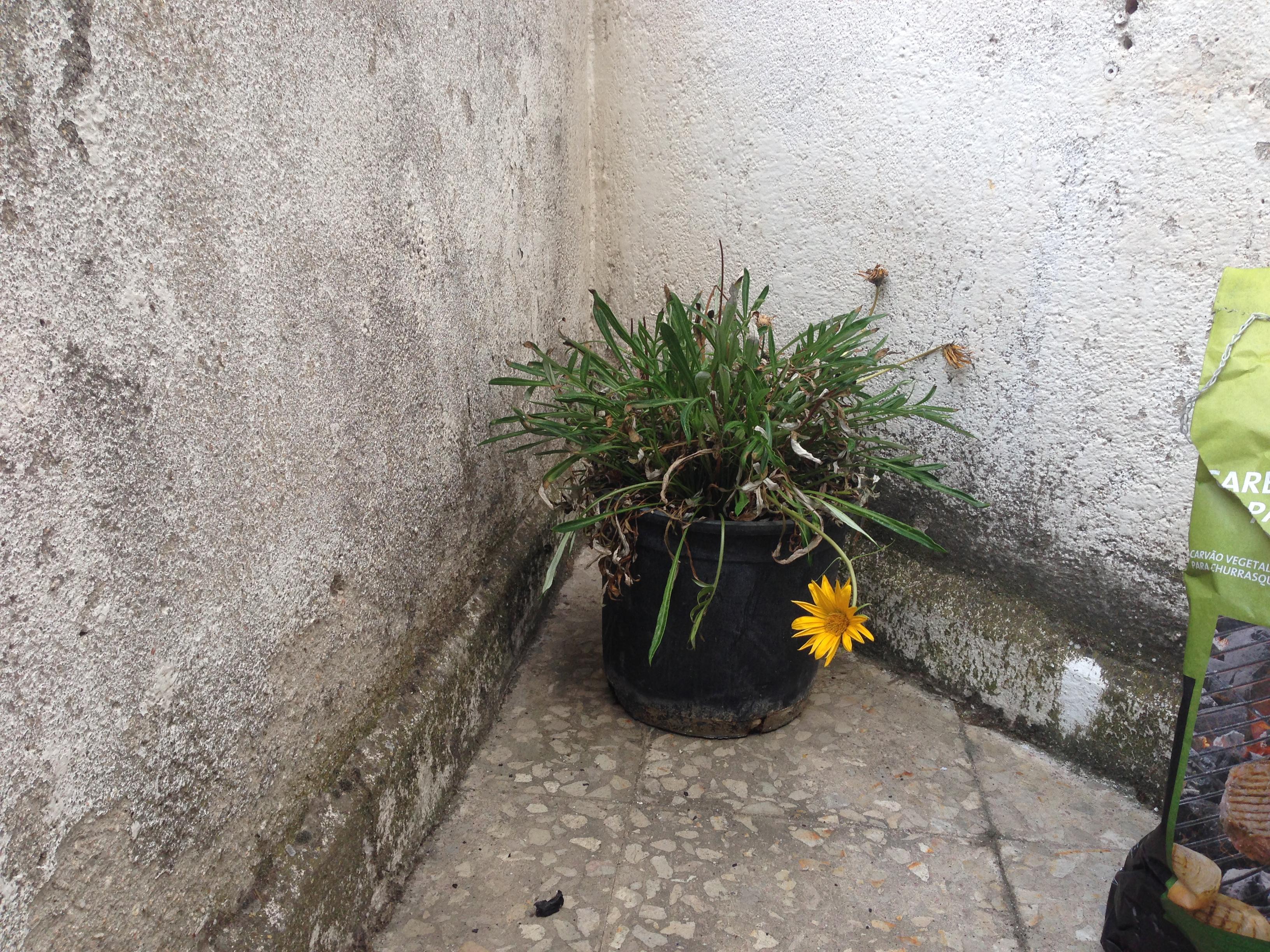 Humedades de jardines y sus problemas - Humedades en casa ...