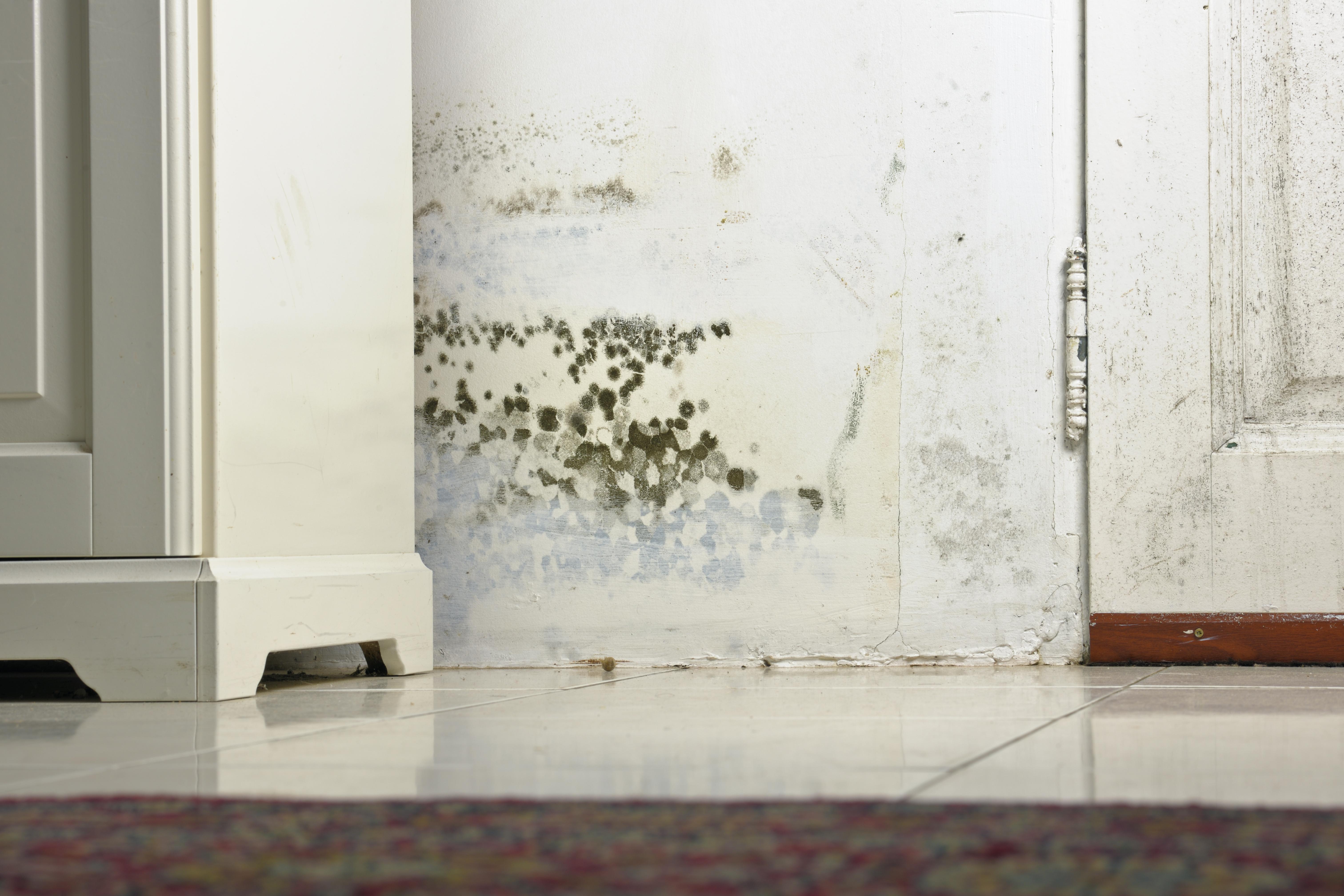 Moho en las paredes qu es y c mo quitarlo murprotec - Imagenes para paredes ...