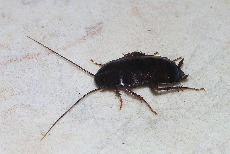 cucarachas humedades
