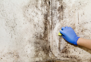 Hand cleans mold in the house