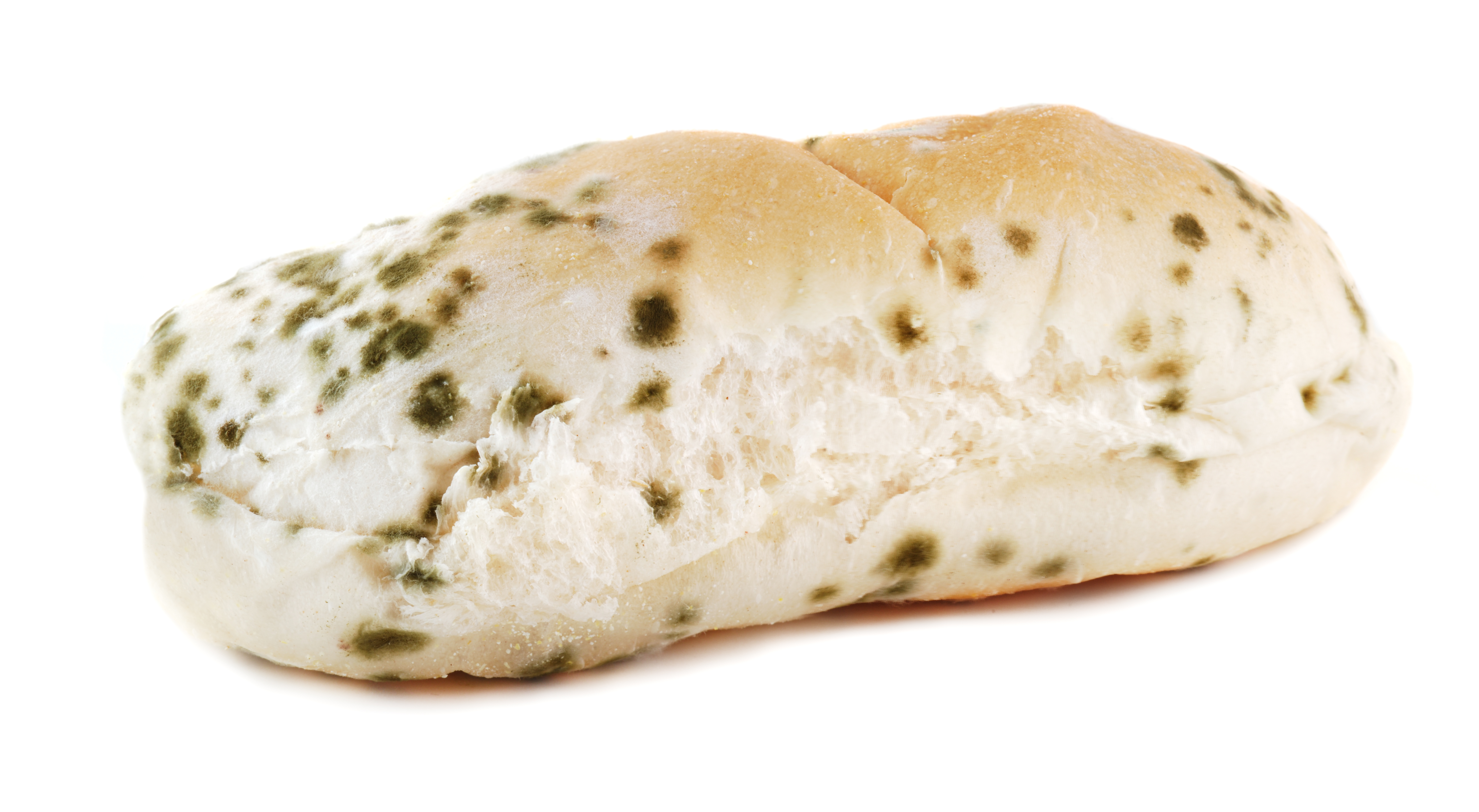 Pan con Moho por humedades