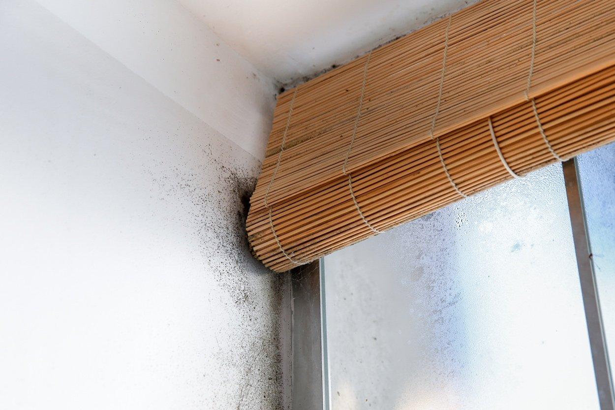 El moho nos da la bienvenida a nuestra casa de vacaciones | Murprotec