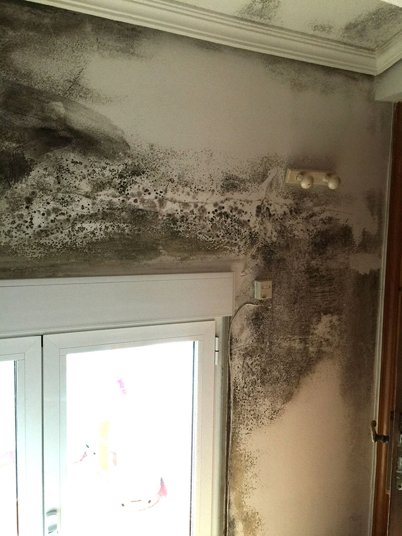 Condensación en pared