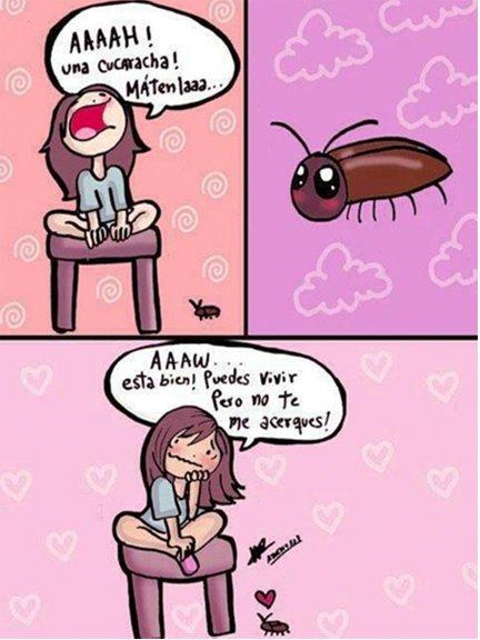 Humedad Cucaracha