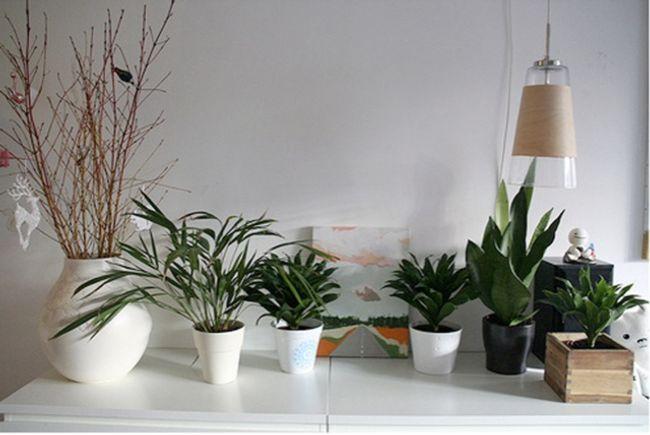 plantas, interior, humedad, humedades