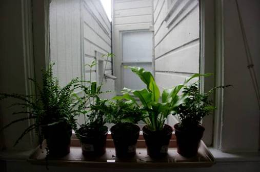 plantas-mejoran-la-salud